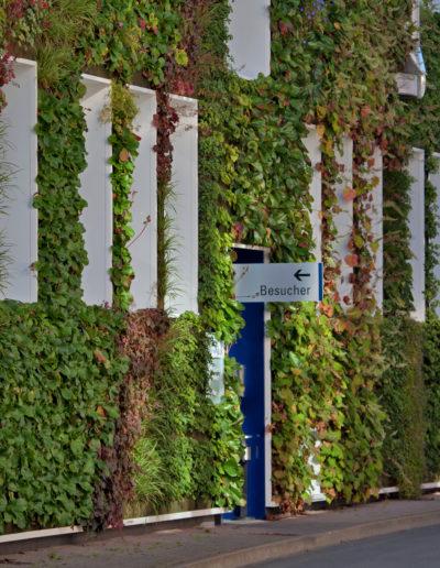 Größte Living Wall Deutschlands