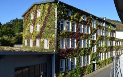 Begrünte Fassaden: Ratgeber und Beispiele